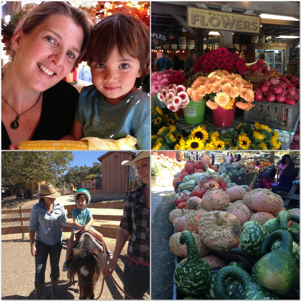 Pony rides, pumpkins and flowers