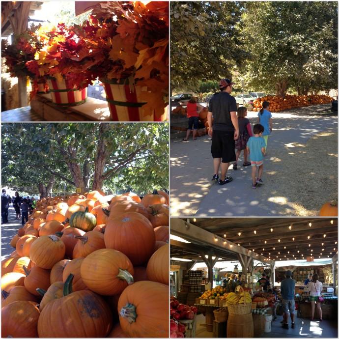 Pumpkins California sunshine style