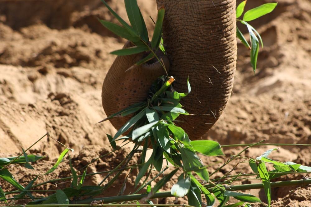 Elephant at Santa Barbara Zoo