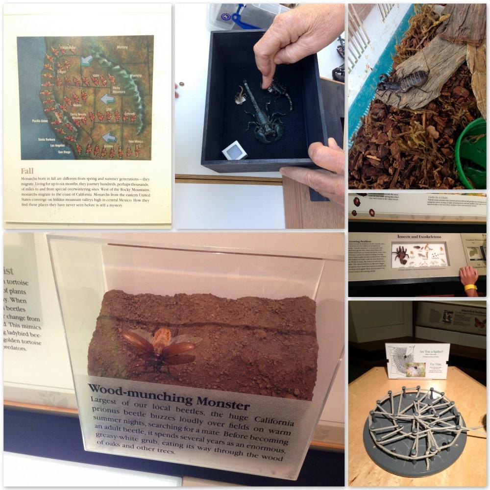 Learning at the Santa Barbara Museum of Natural History