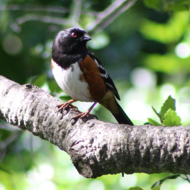 A beautiful bird in the garden