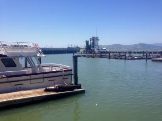 Sea lions around Pier 39 San Francisco