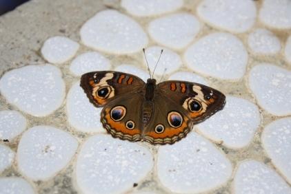 Butterflies Alive!