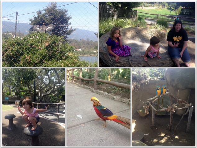 A visit to Santa Barbara Zoo with Frances.