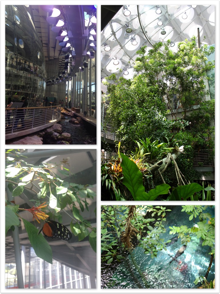 Inside the California Academy of Sciences