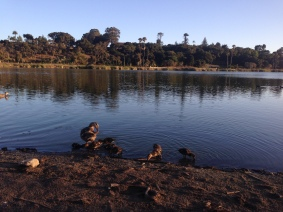 Visiting baby ducks